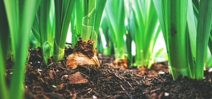 A importância da análise de solo para a produtividade