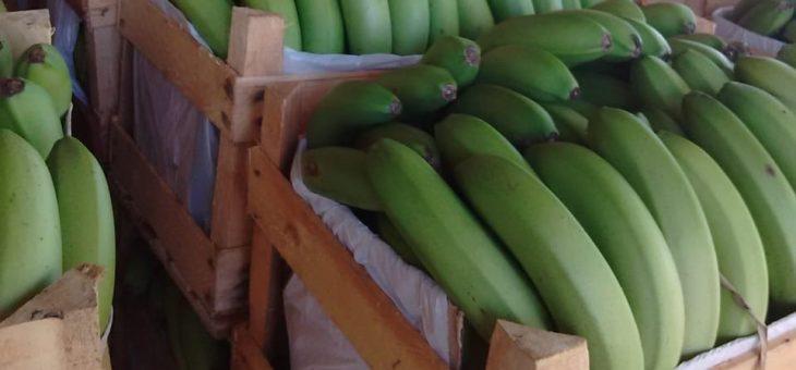 Fertilizantes Bio Macro recuperam produção de banana